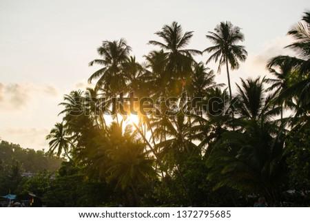 tropical coastline of coconut trees and beach #1372795685