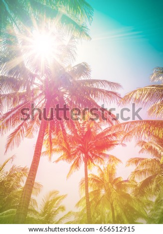 Tropical coconut or palm trees with sunlight  background. For Holiday travel design. Toned pastel effect