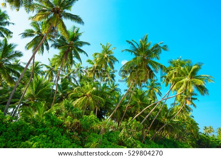 Tropical coconut palm tress on a sunny summer day #529804270