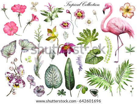 Tropical Collection with plants elements - leaf, flowers. Botanical illustration isolated on white background. watercolor nature. Exotic set with Flamingo, palm, orchid, hibiscus.