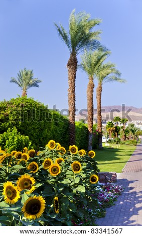 Tropical contrasts in Eilat - famous resort city in Israel