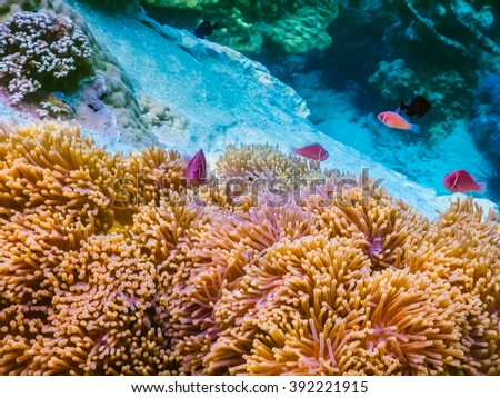 tropical coral reef in Thailand #392221915