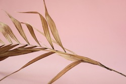 Tropical dry leaves on pink background. Closeup view
