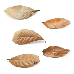 Tropical dry leaves set isolated on white.