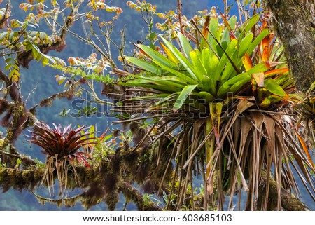 tropical epiphyte on a tree in...
