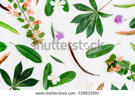 tropical exotic colored leaf pattern on white background. flat lay, top view #528832885