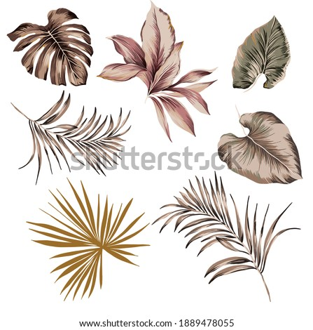 Tropical exotic plants and leaves leaf set isolated for texture seamless pattern repeated, composed by monstera vintage, palm leaf, banana leaves, botanic plants illustration on white background.