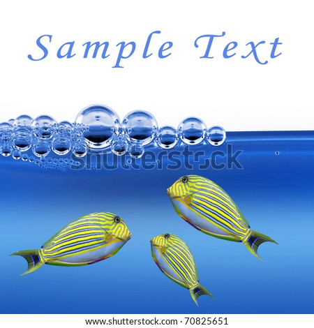 Tropical fish and easy removable text.