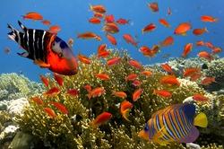 Tropical fish and Hard corals in Marine Aquarium