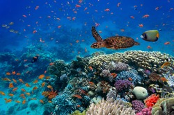 Tropical fish and turtle in the Red Sea, Egypt