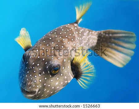 pacific ocean fish  Discover Offset.com new Start