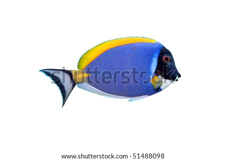 Tropical fish isolated on white.