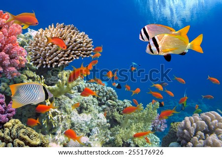Tropical Fish on Coral Reef in the Red Sea #255176926