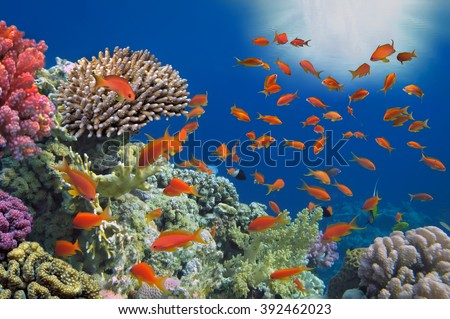 Tropical Fish on Coral Reef in the Red Sea #392462023