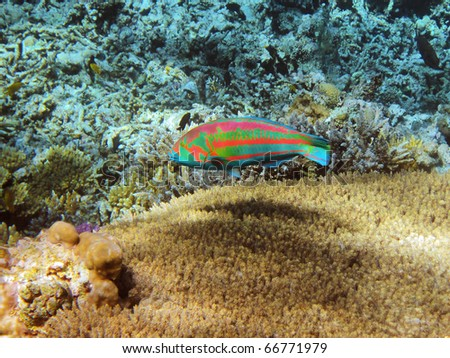 Tropical fish on the coral reef in Red Sea, Egypt