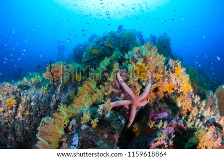 Tropical fish swimming around a beautiful, brightly colored tropical coral reef #1159618864