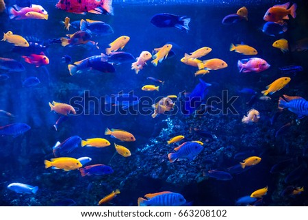 Tropical fish with corals and algae in blue water. Beautiful background of the underwater world. #663208102