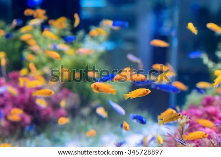 Shutterstock tropical fishes