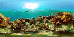 Tropical fishes and coral reef at diving. Underwater world with corals and tropical fishes. Philippines. Virtual Reality 360.