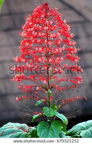 Tropical flower #670321252