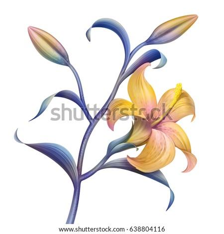 tropical flower, botanical illustration, decorative lily twig, clip art element isolated on white background