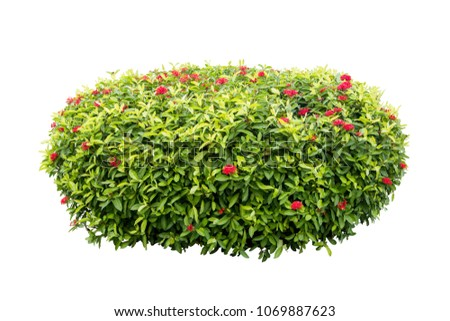 Tropical flower plant bush tree isolated on white background include clipping  #1069887623