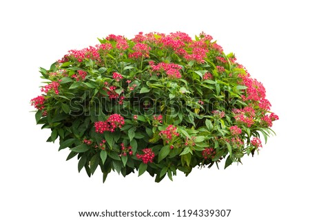 Tropical flower plant isolated on white background  include clipping path #1194339307