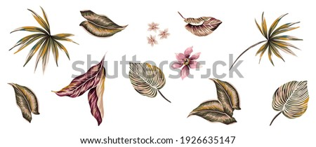 Tropical flowers and exotic leaves set isolated elements suitable for repeated texture, with lily, orchids, plumeria, palm leafs, plants, tropic foliage jungle elements on white backgorund.