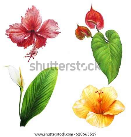 Tropical flowers bloom set