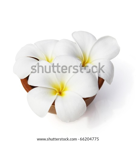 Tropical flowers frangipani (plumeria) isolated on white - stock photo