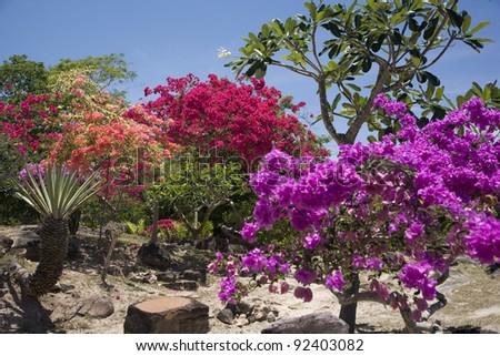 Tropical flowers in Koh Phi Phi island, Thailand