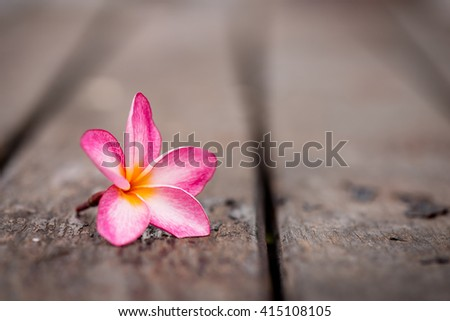 Tropical flowers of Plumeria on old wooden background