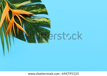 tropical flowers on a blue background #644795125