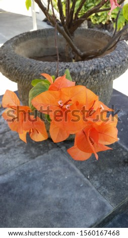 Tropical flowers on a tropical island #1560167468