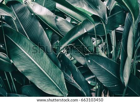 tropical foliage, dark green nature background