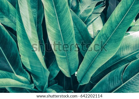 tropical foliage, large green leaf texture background #642202114