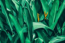 tropical foliage nature dark green background
