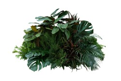 Tropical foliage plant bush (Monstera, palm leaves, Calathea, Cordyline or Hawaiian Ti plant, ferns, and fir) floral arrangment nature backdrop isolated on white with clipping path.