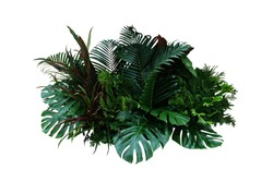 Tropical foliage plant bush (Monstera, palm leaves, Calathea, Cordyline or Hawaiian Ti plant, ferns, and fir) floral arrangement indoor garden nature backdrop isolated on white with clipping path.