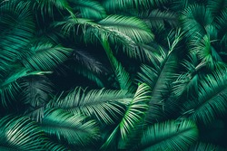 tropical forest natural background, nature scene in green tone style