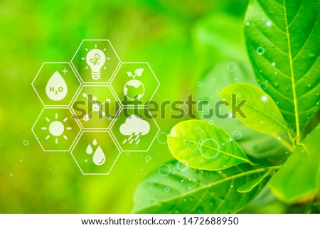 Tropical forest of ecology, Green leaves are ecological integrity, Close-up #1472688950