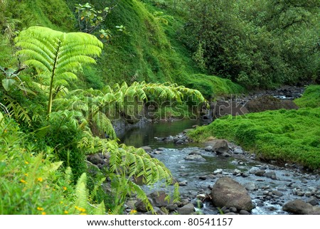 Tropical forest of Tahiti - stock photo