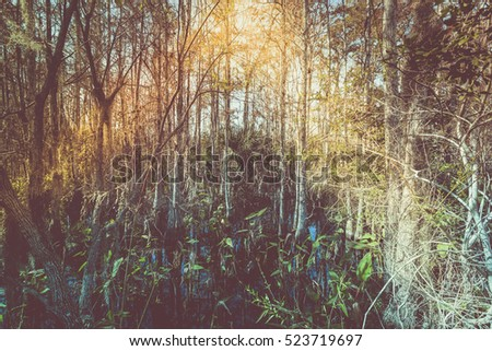 Tropical forest swamp, Florida. Vintage tone colors with lens flare