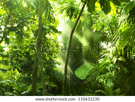 Tropical forest trees in sunlight and rain