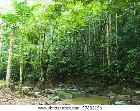 tropical forest with sunbeam