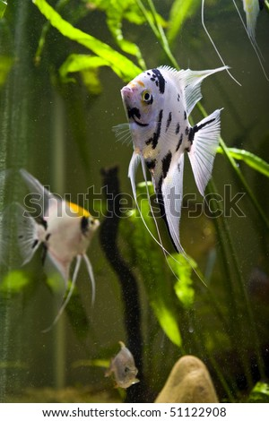 Colorful Freshwater Fish on Tropical Freshwater Aquarium With Colorful Fish And Green Plants Stock