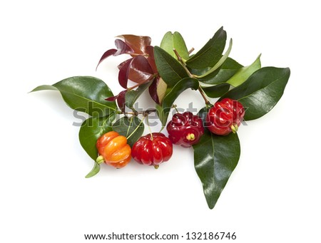 Tropical fruit also called Pitanga, Brazilian Cherry, Suriname Cherry, Cayenne Cherry