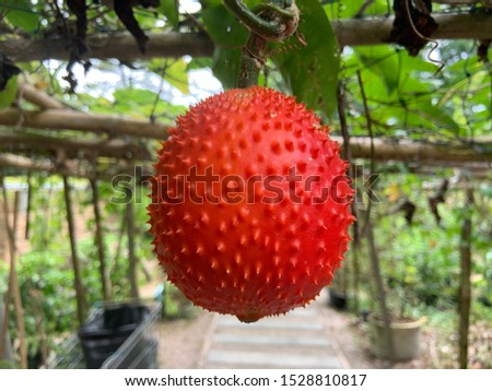 Tropical fruit has a sweet and sour taste