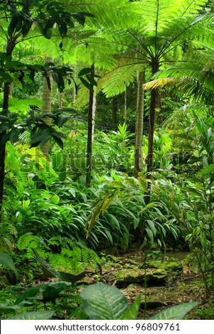 Tropical garden design cairns for Garden design queensland