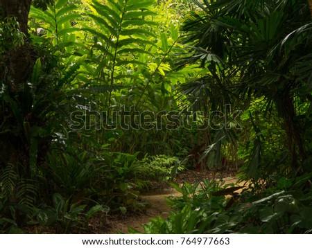 Tropical Garden Path, Queensland, Australia #764977663